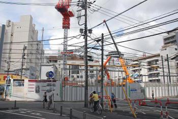 Tibakashiwa08113