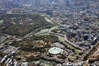 Tokyotidorigafuti09041