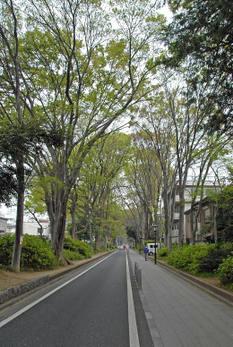 Saitamaomiya09055