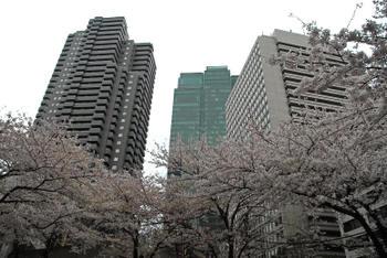 Tokyomori10023