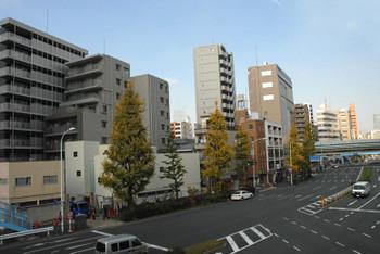 Tokyoshirokame14071
