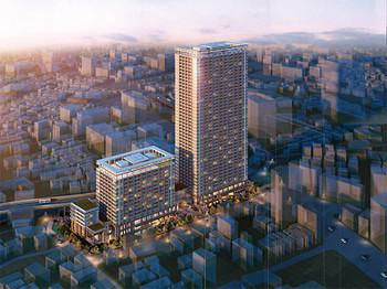 Tokyoshirokame14072