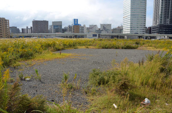 Yokohamamm21150335