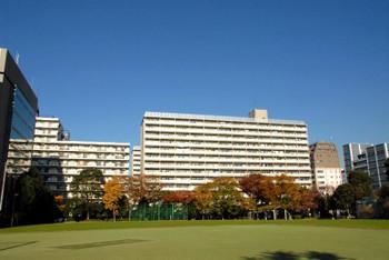 Tokyotoyoumi15111