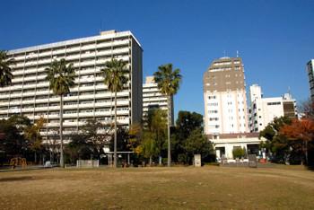 Tokyotoyoumi15113