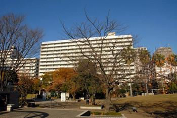 Tokyotoyoumi15114