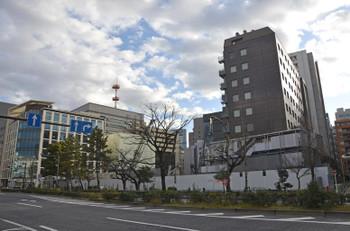 Tokyoshiba16046