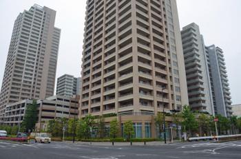 Chibakashiwanoha16075