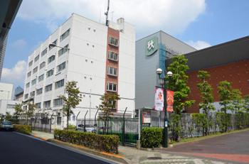 Tokyotakeshiba16116