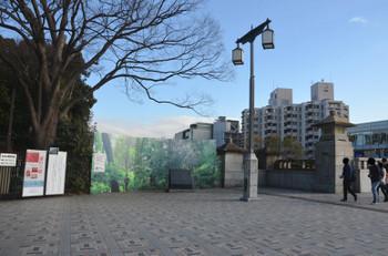 Tokyoharajuku170315