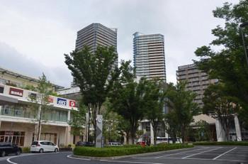 Chibakashiwanoha180311