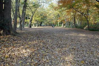 Kyoto20075