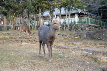 Nara12