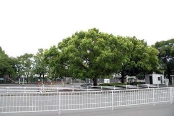 Kyotoyodo08096