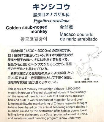 Nagoyazoo09095