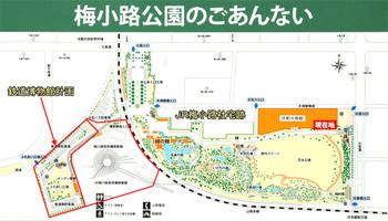 Kyotoumekoji13071