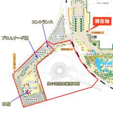 Kyotoumekoji13072_2