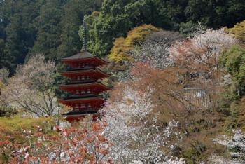Nara180111
