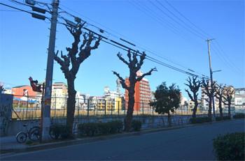 Osakashinimamiya16