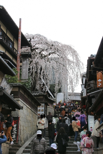 Kyotospring190415