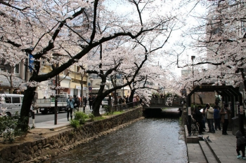 Kyotospring190422