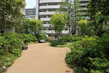 Osakasagisu190662