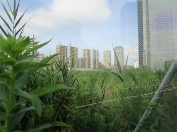 Chibamakuhari200723